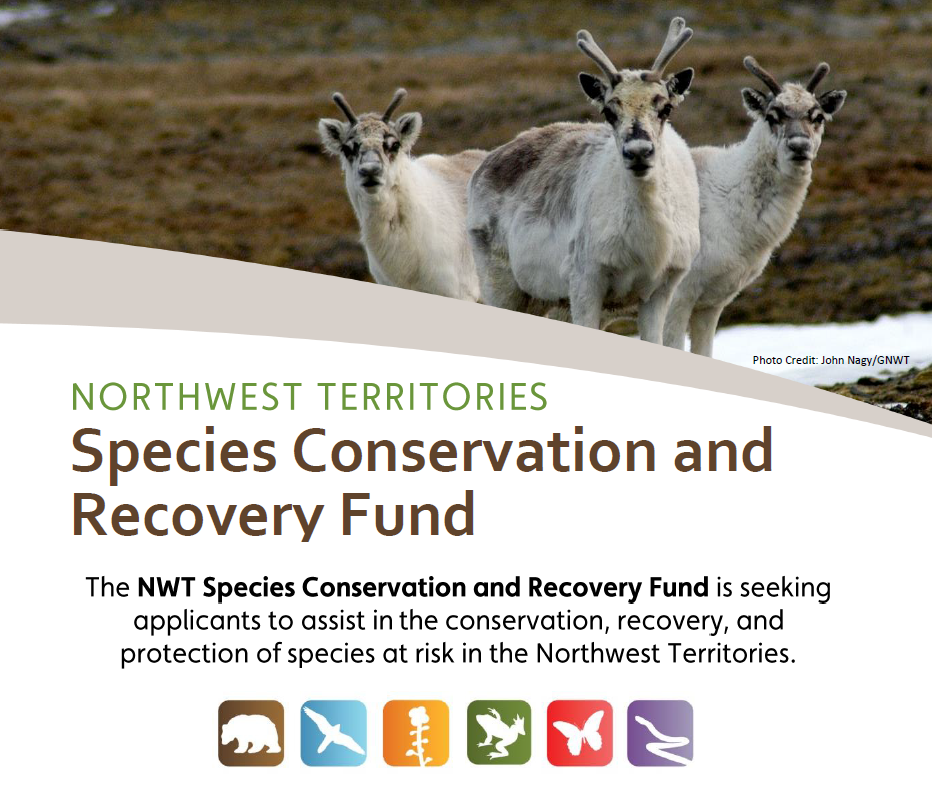 Supporting the long-term conservation, recovery, and protection of species at risk in the NWT.